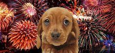 10 Consejos para calmar a tu perro durante los fuegos artificiales.