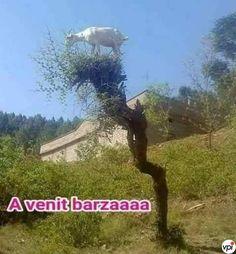A venit barza! - Viral Pe Internet Animals Photos, Internet, Fun, Funny