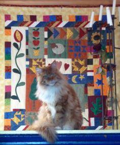 Die Katze passt zum Quilt leider ist das Bild nicht ganz scharf aber sie saß gerade so schön