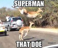 Funny Meme About Superman