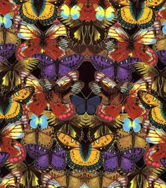 Wandering Spirit Collection -  Butterfly Multi ITY Knit
