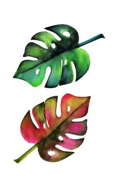 Monstera Leaves Swiss - Free image on Pixabay Free Pictures, Free Images, Monstera Leaves, Design Elements, Clip Art, Illustration, Commercial, Elements Of Design, Free Pics