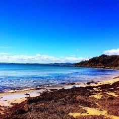 https://flic.kr/p/G1nVDY | Magic swim at Shelley beach today! #michfrost