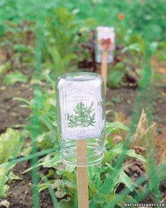 So easy, how come I didn't think of that? Protect Plant Markers    Seed packets make excellent markers for seedlings because they are chock-full of information. But left unprotected, the paper will fall apart in the first rainstorm. Attach packets to wooden stakes by slitting the bottom of the paper with a knife and sliding the stake through; shield each marker under a small inverted mason jar.