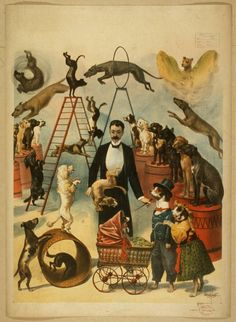 Title: [Trained dog act]   Creator(s): Courier Litho. Co.,   Date Created/Published: Buffalo, N.Y. : Courier Litho. Co., c1899.