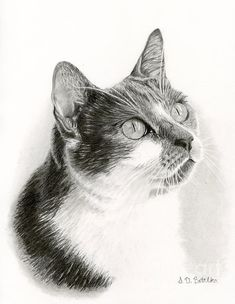 This is another drawing by Sarah Batalka and it of course is fantastic!  The details are spectacular!