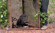 Globo Repórter - Catálogo de Vídeos - Animais vítimas do tráfico são libertados na vibrante floresta da caatinga