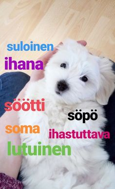 """Ways to say """"cute"""" or """"adorable"""" in Finnish. Language Quotes, Language Lessons, Learn Finnish, Finnish Words, Finnish Language, Helsinki, Finland Travel, Cute Words, Fun Facts"""