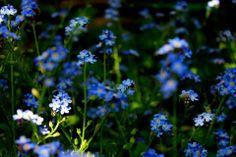 #Fiori #blu