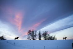 Montana's Spring Lambs - As dawn breaks, a few horses stride across the horizon line. Credit: Rob Finch   © The Weather Channel