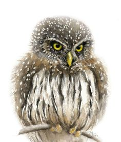 High quality giclée print of my original watercolor painting. Print will come signed and dated, safely packed in a protective sleeve with sturdy backing. Available in different sizes: - Print Watercolor Fish, Watercolour Tips, Owl Paintings, Watercolor Paintings, Owl Quilts, Owl Photos, Felt Owls, Winter Painting, Art Deco Posters