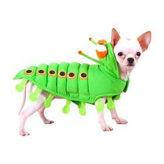 Puppe Love Caterpillar Dog Costume