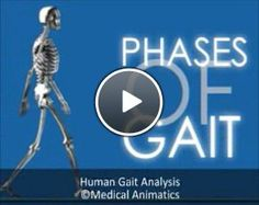 How we move - the Gait Cycle