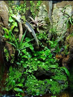 Duff's Terrarium Collection - The Planted Tank Forum