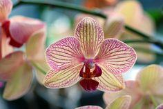 Sai come curare un'orchidea?