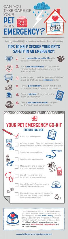Do you have a pet emergency go-kit? Make sure you are #petprepared in case of an emergency or natural disaster. #ad