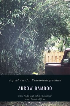 What to do with all the bamboo? Use it! Here are four great uses for arrow bamboo one of the most useful and nutritious bamboos. Bamboo Leaves, Arrow, Plants, Plant, Arrows, Planets