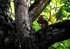 Un écureuil.