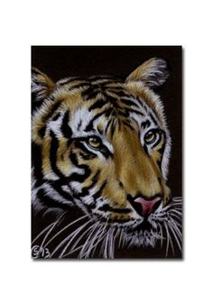 TIGER 43 portrait big cat feline pencil painting Sandrine Curtiss Art Limited Edition Print ACEO by Sandrinesgallery