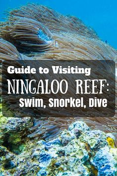 Visiting Ningaloo Reef was by far the highlight of our trip to Western Australia. The days that we spent in Coral Bay and Exmouth were the happiest and most memorable days of our trip. Australia Destinations, Australia Travel, Moving To Australia, Perth Australia, Visit Australia, Broome Western Australia, Darwin Australia, Travel Destinations, Highlight