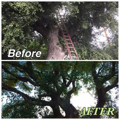 Tree Care Services in California   McMartin Tree Experts