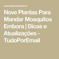 Nove Plantas Para Mandar Mosquitos Embora | Dicas e Atualizações - TudoPorEmail