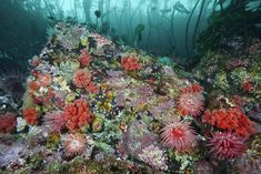 Anemones and red soft coral carpet the floor