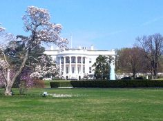 The White House and the Cherry Tree