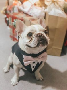 Blue Formal Dog Tuxedo ,Wedding Tuxedo For Dogs ,Custom Made Suit ,pet wedding attire Tuxedo, with choice of color bow tie Dog Wedding Outfits, Dog Wedding Attire, Tuxedo Wedding, Sexy Wedding Dresses, Dogs In Wedding, Dog Tuxedo, Custom Made Suits, Dog Suit, Dog Bows