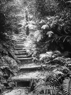 Path to Katoomba Falls (c. 1900), Blue Mountains (NSW Australia) via Powerhouse Museum (Flickr Commons). Modern Pictures, Old Pictures, Old Photos, Vintage Photos, Blue Mountains Australia, Australian Road Trip, Local History, Back In The Day, Historical Photos