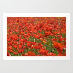 Red poppies 1918 Art Print by metamorphosa - $22.88