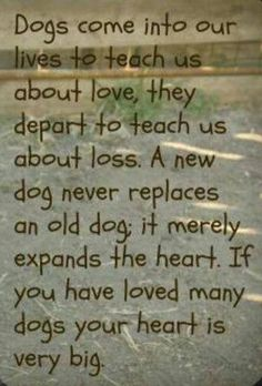 Dogs come into our lives...