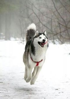 He's just skipping through the snow with a smile!  Love it