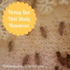 Honeybee unit study ideas and links inspired by a trip to see the new glass enclosed beehive at the local library.