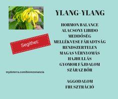 doTerra receptek - Ylang-ylang Health 2020, Doterra, Essential Oils, Essential Oil Uses, Doterra Essential Oils, Essential Oil Blends