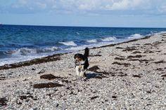 Hundeurlaub auf Fehmarn - nur 600 Meter zum Strand