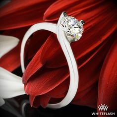"""From the french word meaning """"Beloved"""", the """"Carina"""" Solitaire Engagement Ring is sure to sweep your love off their feet. The 4 graceful prongs spiral upward creating a unique and secure home for your diamond."""