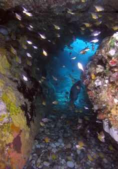 Not far from Looking Glass Island is Cod Rock. It's a series of gutters and boulders topped with Kelp. This is a difficult site to navigate so it is recommended you follow the complimentary divemaster service provided on all our boat dives.