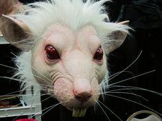 White rat mask