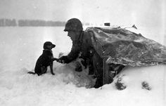 A soldier of the 99th Infantry Division with his pup in the Ardennes.