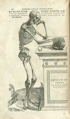 Vesalius's Anatomy Lesson - Skeleton contemplates mortality; Early Modern anatomy diagram. I just love how they look both really happy and really casual. Like: I'm dead but screw it! I'm gonna start living it up.