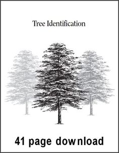 NATURE WALK: Tree Identifcation Guide (Sample Pages) by CHSH1, via Flickr
