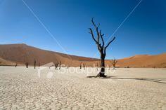 Namibia Desert Dead Vlei Trees Royalty Free Stock Photo