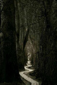 Dark Forest Nemophilist Sanctuary Winding Path