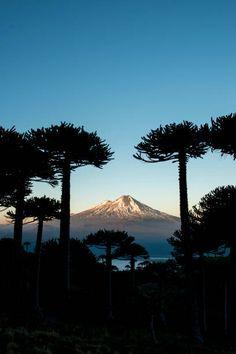 Conguillio National Park, Araucania, Chile. Chile, Mount Rainier, Landscape Photography, Landscapes, Earth, Embroidery, Mountains, Nature, Painting