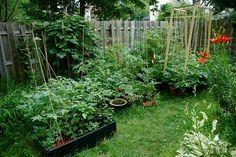 Milyen zöldséget érdemes ősszel ültetni? Green Garden, Garden Plants, Planning And Organizing, Edible Garden, Lush Green, Garden Planning, Beautiful Flowers, Environment, Herbs