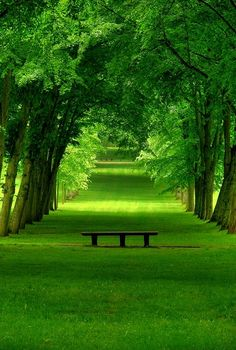 Bench on a green path. [ CandaceWilsonArtStudio.com ]                                                                                                                                                      More