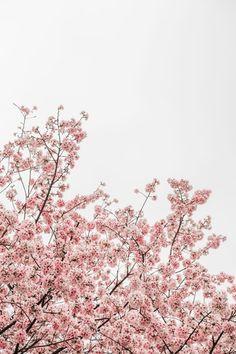 samsung wallpaper spring Spring Blossom iPhone Wallpapers by Preppy Wallpapers Iphone Wallpaper Pink, Wallpaper Spring, Frühling Wallpaper, Flowers Wallpaper, Trendy Wallpaper, Pattern Wallpaper, Wallpaper Backgrounds, Nature Wallpaper, Phone Backgrounds
