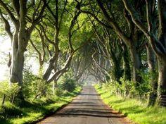 The Dark Hedges wordt deze weg genoemd en ligt in County Antrim in Ierland. De tunnel wordt gevormd door eeuwenoude beukenbomen.