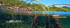 agua mangue - Pesquisa Google